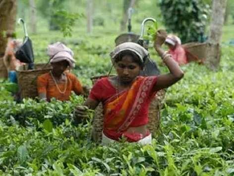 PM से बागान मजदूर, क्या हुआ 'चायवाला' वादा