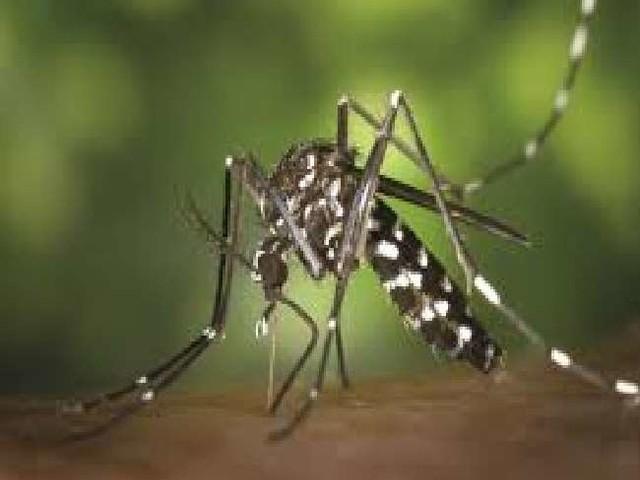 Dengue Malaria Fever Updates: डेंगू-मलेरिया और वायरल फीवर का कहर बरकरार, जानें यूपी-हरियाणा में क्या है ताजा स्थिति