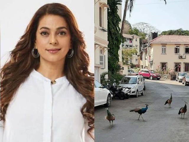 Juhi shares pics of peacocks roaming in Mumbai