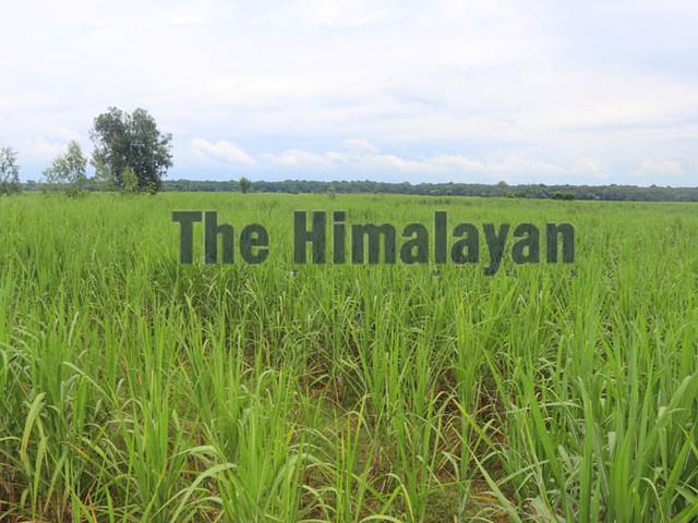 Sugarcane farmers facing hard time