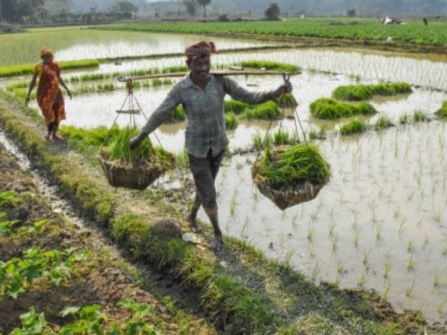 പിഎം കിസാന് പദ്ധതി: അര്ഹരല്ലാത്ത 42 ലക്ഷം കര്ഷകര്ക്ക് വിതരണം ചെയ്ത 3000 കോടി തിരിച്ചുപിടിക്കും