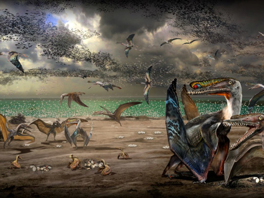 Pterosaur species illustration