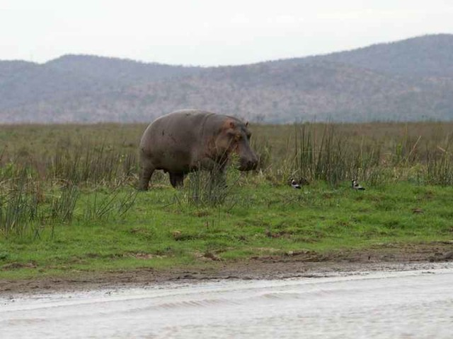 Militias, poachers wreak havoc on central Africa's wildlife