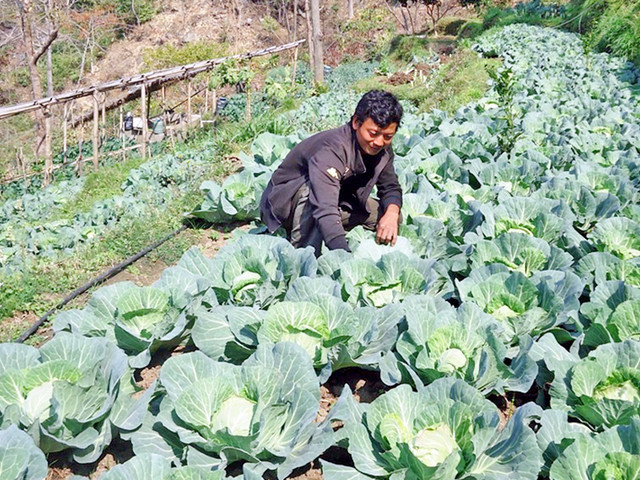 Farmers cry trouble as govt plan backfires after DADO shutdown