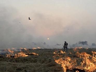 पराली जलाने से रोकने में 1151 करोड़ खर्च, लगी 56 हजार मशीनें, 41% कमी का दावा