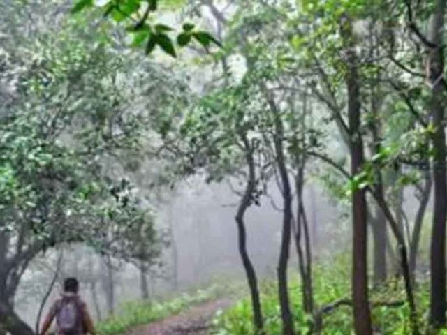 Fight climate change by granting indigenous rights to forests: Report