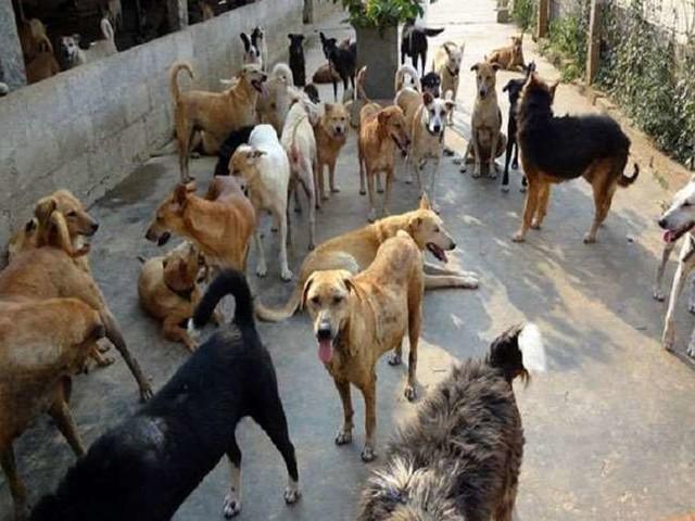 अहमदाबाद में लगातार बढ़ रही है कुत्तों की संख्या, हाईकोर्ट ने मांगा जवाब