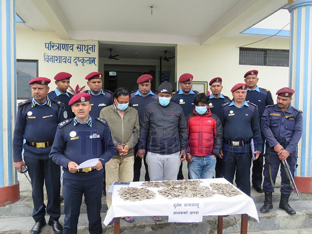 Three arrested with pangolin scales in Makawanpur