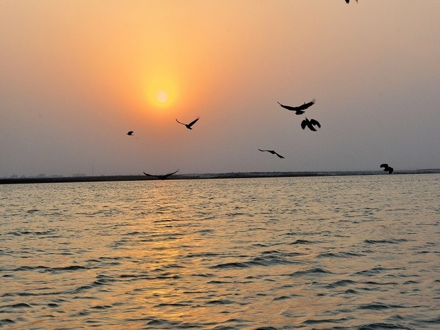 Clean rivers on a priority basis: Water activist to Centre