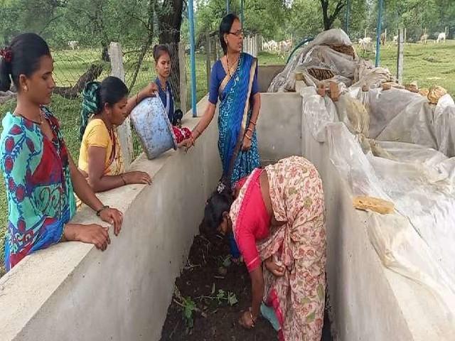 मध्य प्रदेश में अनूठा नवाचार, बूढ़ी गायों से प्यार के बदले मिला रोजगार, जानें कैसे मिली सफलता