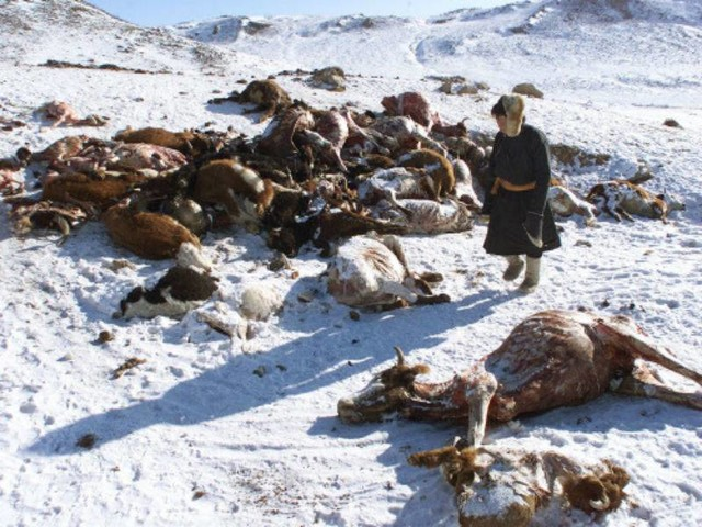 Winter turns disastrous for Mongolia's nomad herders