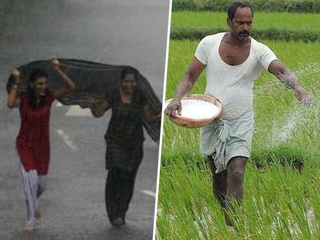 मुस्कराए किसानों के चेहरे, जाते-जाते रबी सीजन को हरियाली दे गया मानसून, जानें क्या पड़ा असर