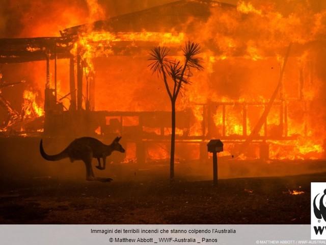 Unep: i 10 devastanti impatti dei mega-incendi boschivi australiani
