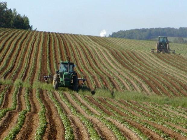 Primato in positivo per la Sicilia, primi per numero aziende agricole condotte da giovani