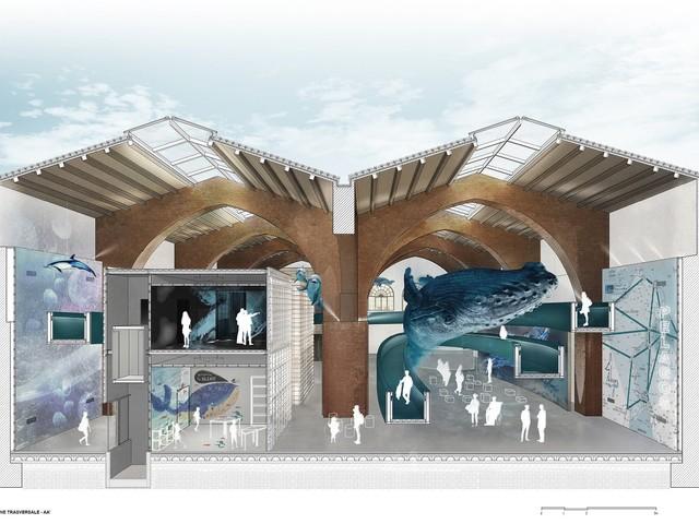 Centro di interpretazione del Santuario internazionale dei mammiferi marini: ecco il progetto vincitore