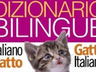 Paese che vai, miao che trovi.  Ecco il vocabolario dei gatti.