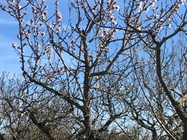 """""""Primavera anticipata, disastrosi effetti della tropicalizzazione"""", l'allarme della Coldiretti per l'agricoltura barese"""