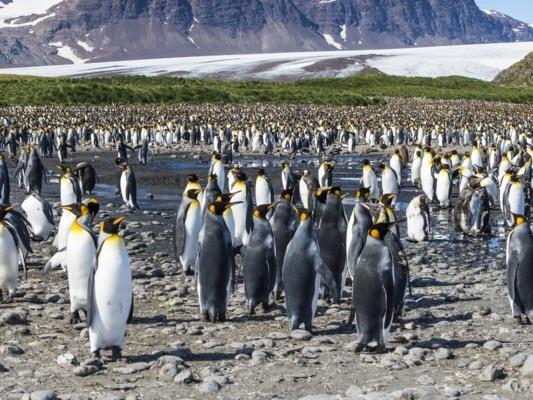 """""""Era alto quanto un uomo"""".Scoperti i resti un pinguino gigante"""