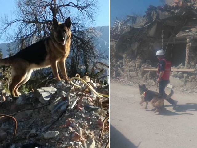 Addio Laga, cane eroe di Amatrice che ha scavato nelle macerie per salvare vite dopo il terremoto