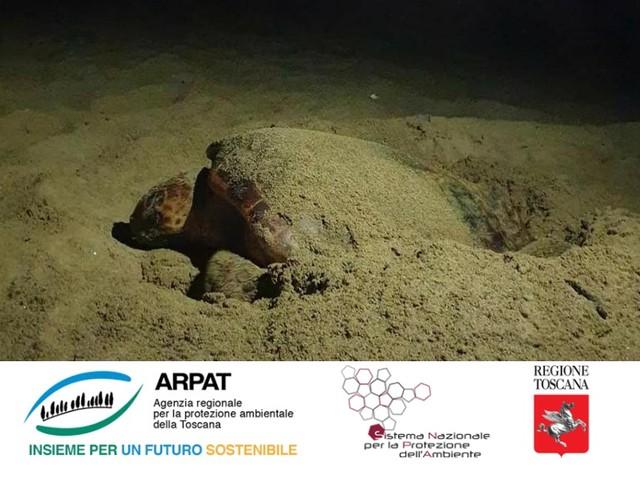 Dove hanno nidificato le tartarughe marine in Toscana. Il punto dell'Arpat