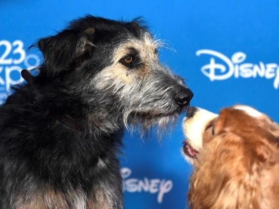 Lilli e il vagabondo: la storia di Monte, il cane randagio diventato protagonista del remake