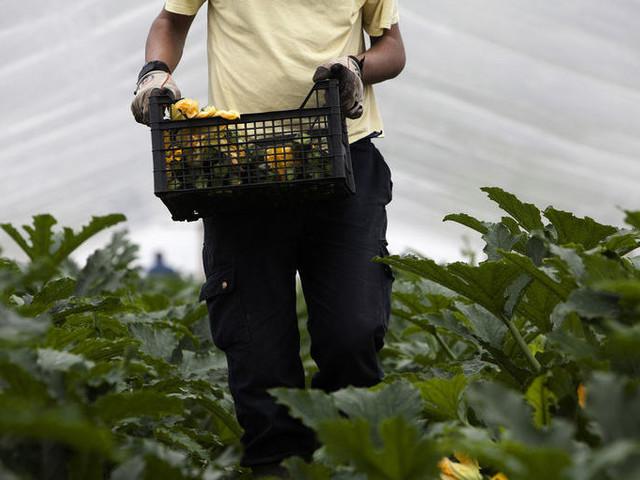 Caporalato, al via la Rete del lavoro agricolo di qualità nella Bat