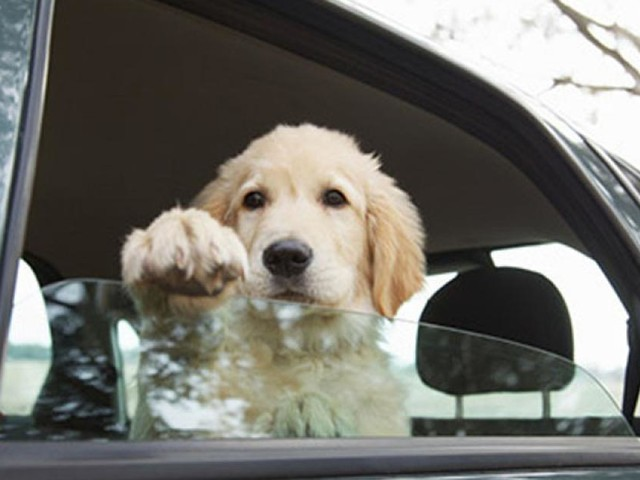 Trasporto in auto di animali d'affezione: vademecum del Ministero della Salute