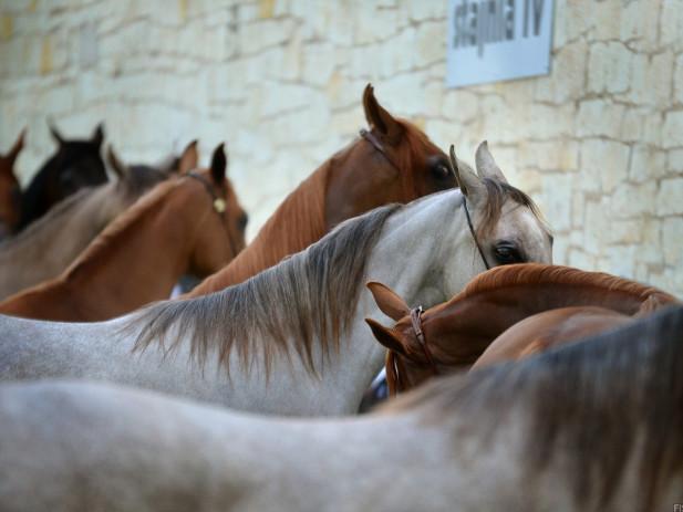 Il lockdown dei cavalli