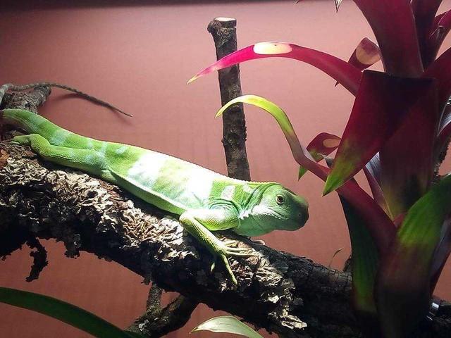 Dragons: la mostra di sauri vivi più grande al mondo