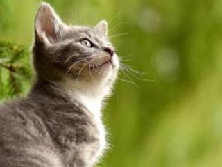 Gatti, volpi, aquile, pipistrelli. Le spie sono delle bestie