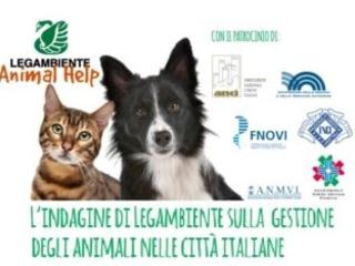 Animali in città: in Italia il numero di gatti e cani è simile. Modena, Prato e Verona i Comuni più virtuosi