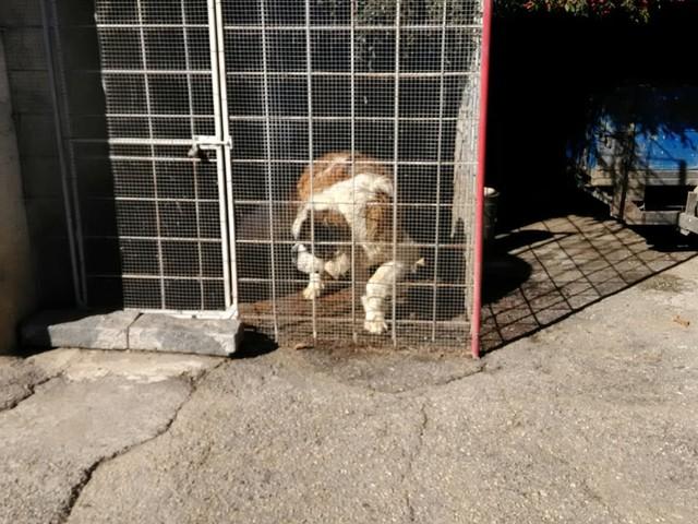 """Maltrattamenti di cani, denunce """"a vuoto"""" Su 85 segnalazioni solo due sequestri Gli animalisti insorgono dopo la morte di Zeus - VIDEO"""