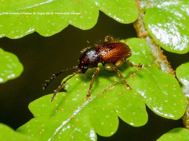 Scoperte 11 nuove specie di insetti. «Se non conosci il nome, muore anche l'essenza delle cose»