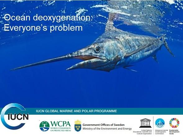 La deossigenazione degli oceani minaccia la vita marina e la pesca (VIDEO)