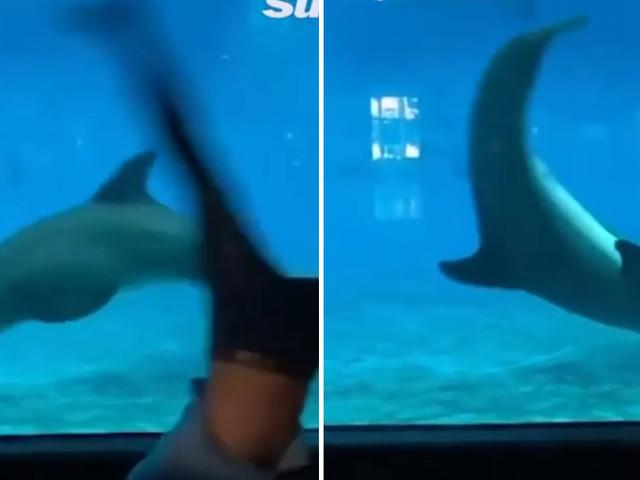 I salti mortali di un delfino che segue i movimenti di un giovane conquistano il web