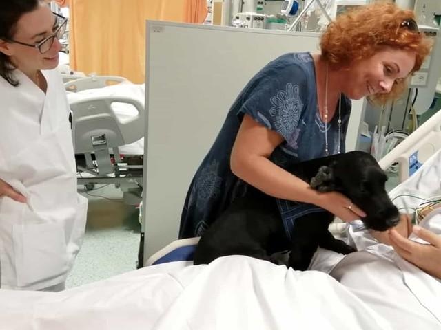 Nello, il cane che va a trovare il padrone in terapia intensiva
