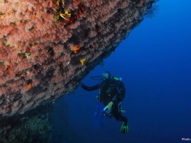 Quanto vale il coralligeno?
