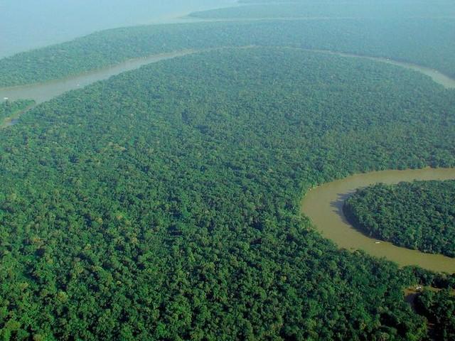 La Foresta Tropicale (o Foresta Equatoriale)