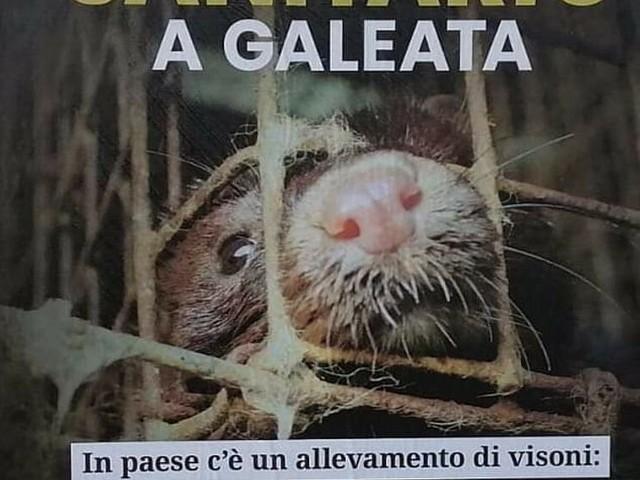 """Coronavirus e visoni, il manifesto che ha allarmato Galeata. Il sindaco: """"Nessun rischio sanitario"""""""