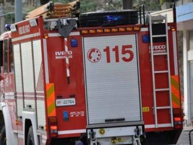 Storno incastrato in un tombino, lo salvano i vigili del fuoco