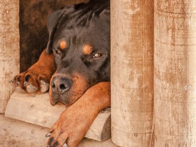 La clinica veterinaria nega le cure al cucciolo firmando così la sua condanna: la famiglia è devastata