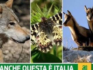 Biodiversità italiana a rischio nella Giornata mondiale della biodiversità