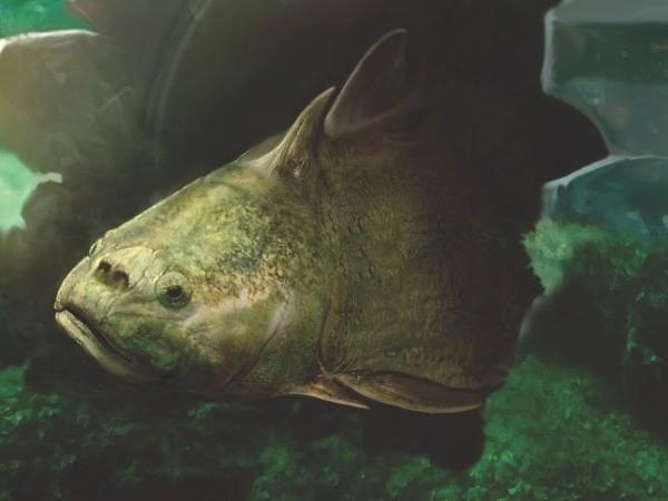 L'antico pesce fossile che rivela l'origine dei denti