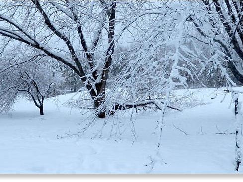 Meteo invernale nel nord degli USA, record di neve in Minnesota