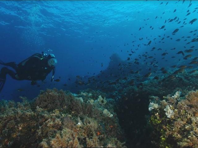 I diving center sentinelle dei fondali protetti di Pianosa (VIDEO)