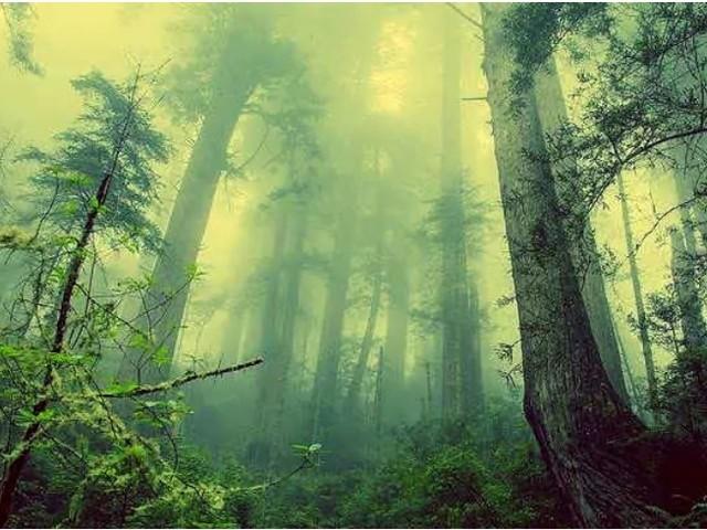 La bioeconomia delle foreste: conservare, ricostruire, rigenerare