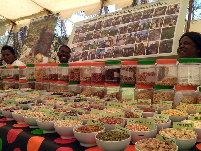 Caritas Zambia urges the Zambian Government to patent local foods
