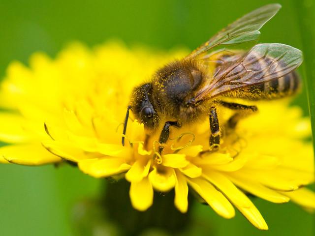 Apilcoltura urbana, l'impegno di Bestway® per proteggere la biodiversità