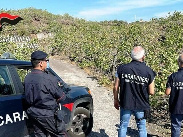 Pistacchio di Bronte, controllati lavoratori di 4 aziende: sanzioni per oltre 6 mila euro