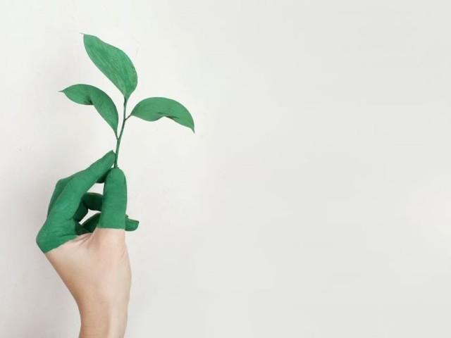 I prodotti biologici sono sinonimo di qualità? Quali scegliere?